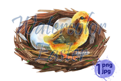 Hand drawn watercolor art bird nest with eggs and chicken
