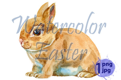 Watercolor illustration of beige rabbit