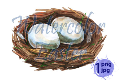 Hand drawn watercolor art bird nest with eggs