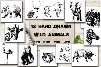 12 hand drawn wild animals