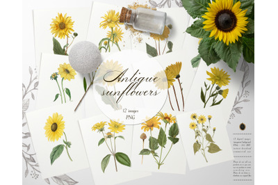12 Vintage Sunflower Ephemera Transparent Images PNG