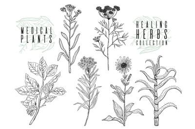 Plant herbal set