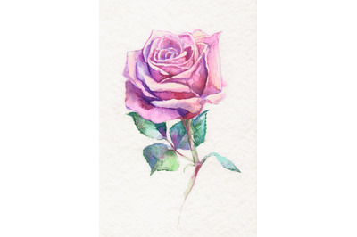 Hand-drawn watercolor and pencil rose illustration
