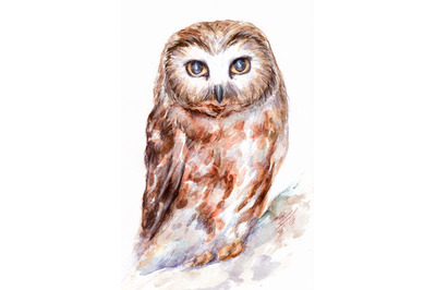 Hand-drawn watercolor and pencil owl illustration