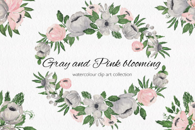 Gray and Pink Blooming. Watercolour clipart collection.