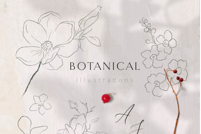 Line Drawing Botanicals, Plants + Oli Paints Texture