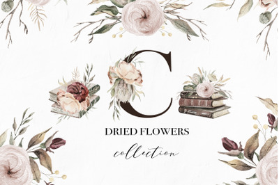 Dried flowers watercolor collection
