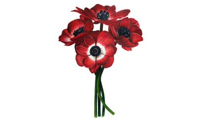 Watercolor botanical illustration. Red Anemones - wall art