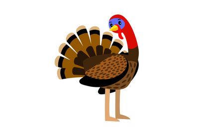 Turkey. Vector thanksgiving traditional turkey bird animal closeup ill