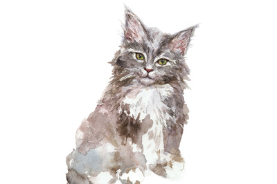 Hand-drawn watercolor Maine Coon kitten illustration
