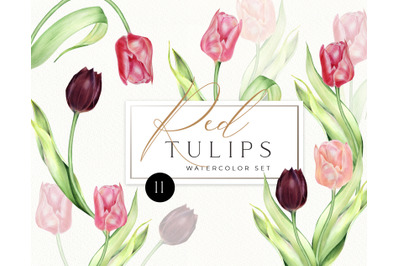 Watercolor Red Tulips individual PNG clipart. Spring flowers clip art,