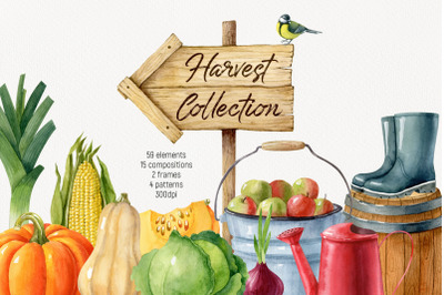 Watercolor harvest collection