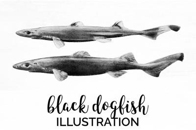 Sharks - Black dogfish Vintage Clipart Graphics