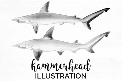 Sharks - hammerhead Vintage Clipart Graphics