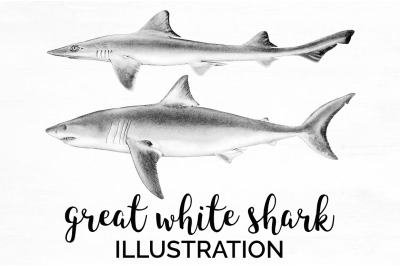 Sharks - Great white shark Vintage Clipart Graphics