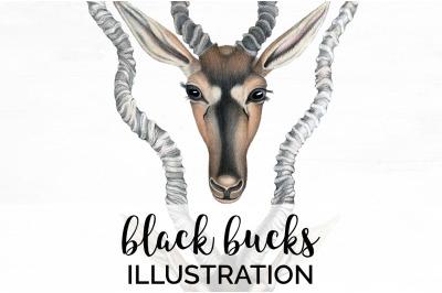 Bucks Deer Clipart