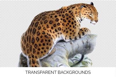Animals - Wild Cat Vintage Clipart Graphics
