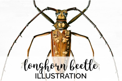 Beetle Insect Clipart