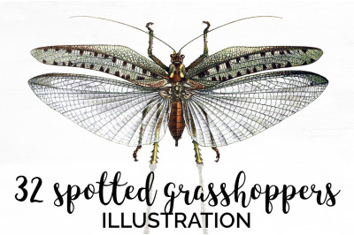 Insects - Thirty two Spotted Grasshopper Vintage Clipart Graphics