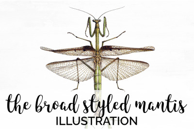 Insects - the Broad Styled Mantis Vintage Clipart Graphics