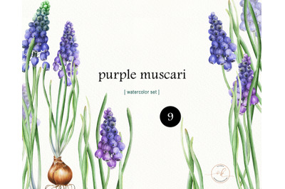 Watercolor Spring Flowers clip art. Easter Clipart.  Purple muscari