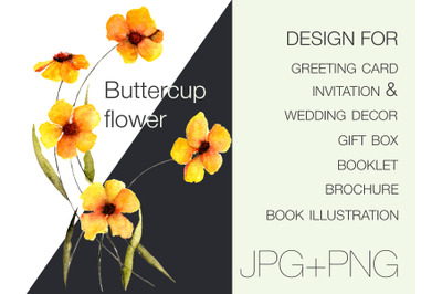 Buttercup flower design for future cards, invitation and wedding decor