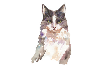 Hand-drawn watercolor and pencil cat illustration
