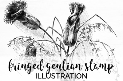 Insects - Fringed Gentian Stamp Vintage Clipart Graphics