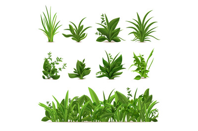 Realistic grass bushes. Green fresh plants, garden seasonal spring gre