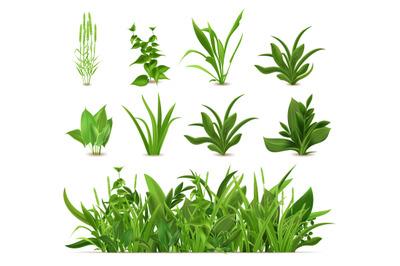 Green realistic spring grass. Fresh plants, garden seasonal growth gra