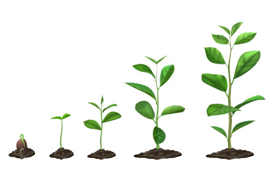 Realistic plant growth stages. Young seed growing in ground, green pla