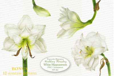 White Hippeastrum. Base Elements for Wedding Floristry.