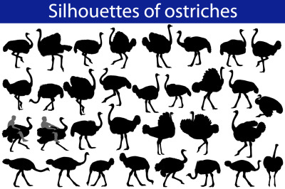 Silhouette of ostrich