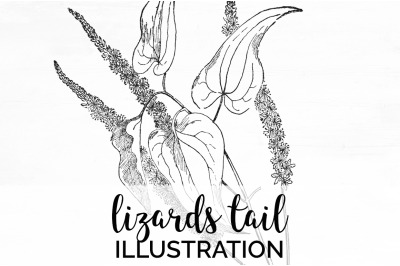 Florals - Lizards Tail Vintage Clipart Graphics Black and white