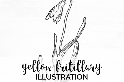 Flowers - Yellow Fritillary Vintage Clipart Graphics
