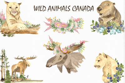 Wild animals of Canada