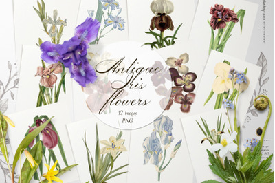 12 Vintage Iris Flowers Ephemera Transparent Images PNG