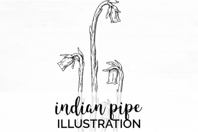 Flowers - Indian Pipe Vintage Clipart Graphics