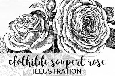Flowers - Clothilde Soupert Rose Vintage Clipart Graphics