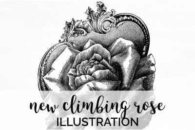Flowers - New Climbing Rose Vintage Clipart Graphics