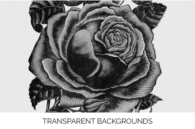 Rose Black and White Clipart