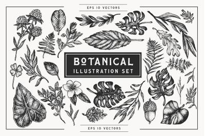 Botanical Stippling Illustration Set