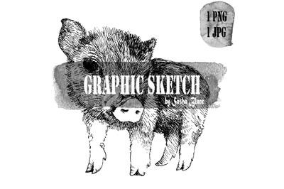 Graphic sketch pig