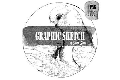 Graphic sketch 2 bird