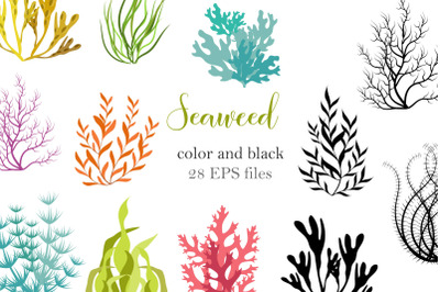 seaweed color and black