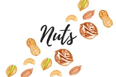 Watercolor nut clip art