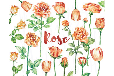 Lovely Rose Watercolor Collections