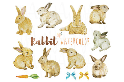 Rabbit Watercolor Collections Set