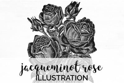 Flower Clipart Black and White - Jacqueminot Meteor Rose Vintage Clipa