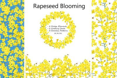 Rabeseed Blooming